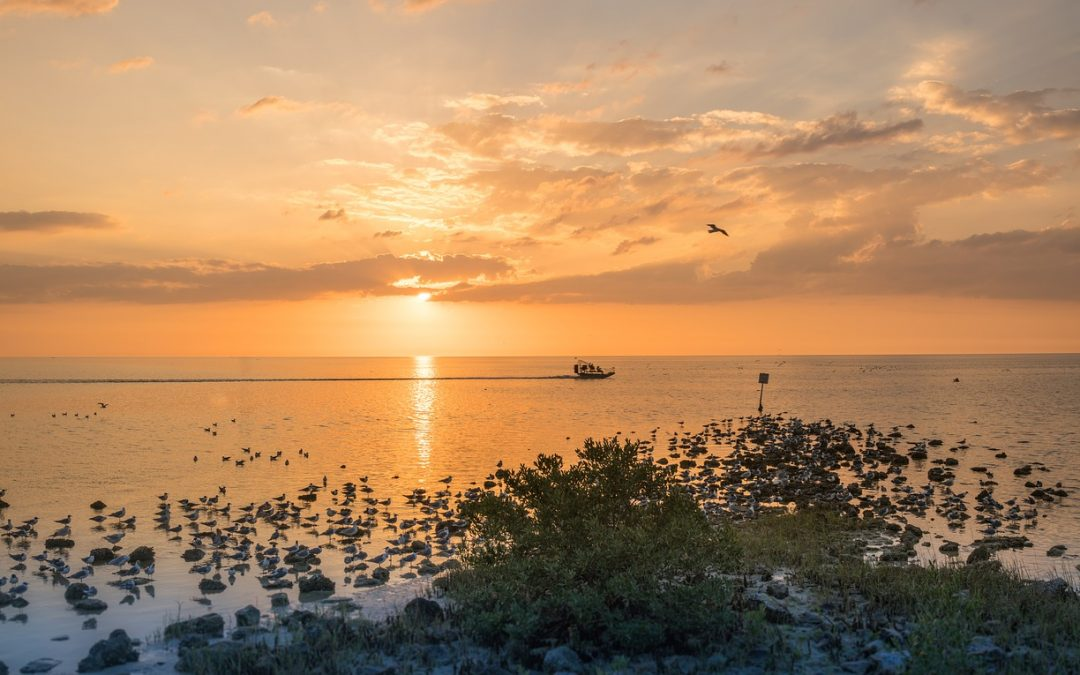 Top Reasons You'll Love a New Home on Pine Island, Florida