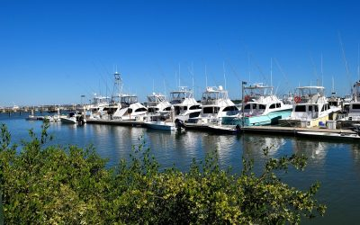 Everything You Need to Know About Fishing in Southwest Florida